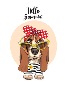 Basset Hound Dog in a striped cardigan, in a red polka dot headband and in a sunglasses. Vector illustration.