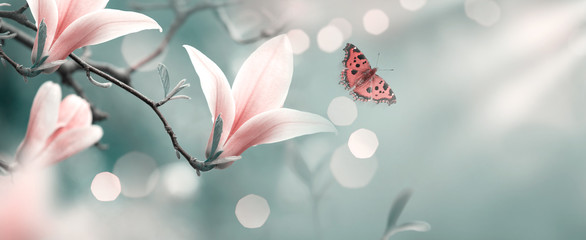 Poster Magnolia Mysterious spring background with pink magnolia flowers and flying butterfly. Magnificent floral banner.