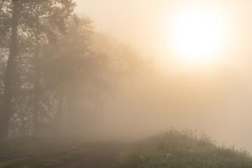 Deserted rural road on a foggy moring in spring. Groningen, Holland.