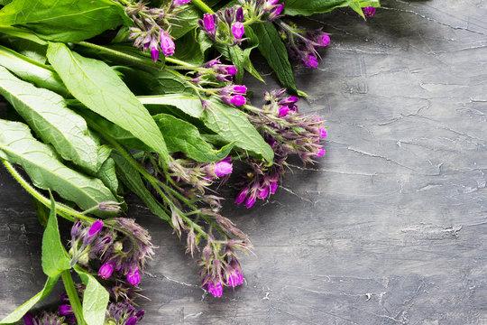 Comfrey medicinal herb