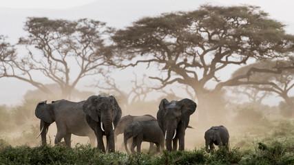 Elephants standing in Amboseli National Park