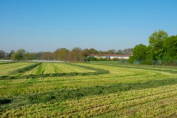 Bauernschaft mit frisch gemähter Wiese . Standort: Deutschland, Nordrhein - Westfalen, Borken
