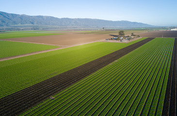 Aerial view of agricultural fields in California