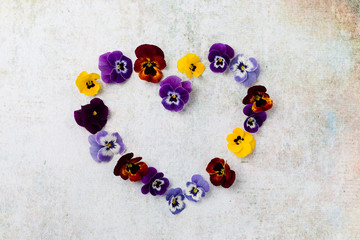 Horned Violet in heart shape, copy space