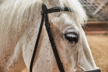 White horse in the pen close up