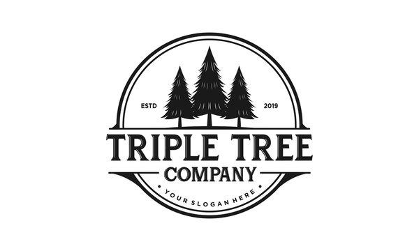 Triple tree logo design. Pine forest vector illustration