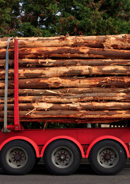 Timber logs on a forestry truck