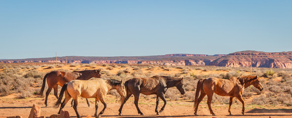 wild horses make their way through open desert land and stop for some chewing on grass, play with each other, seemingly pose for a picture in Page, Arizona