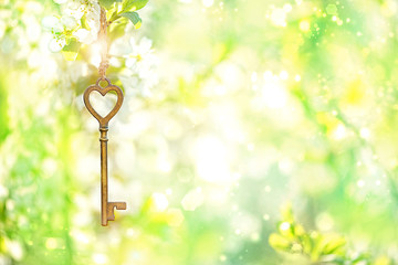 Poster Jaune de seuffre Vintage gold key on branch of blossoms cherry. spring time natural background. key and flowers. secret garden. still life spring blossom season. romantic scene. copy space.
