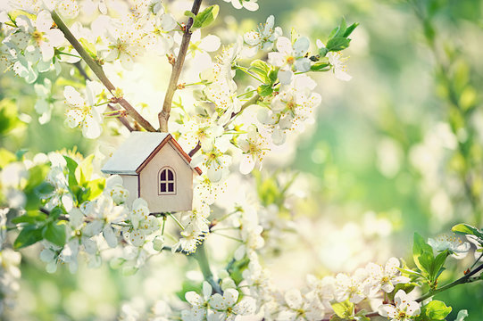 mini toy house and cherry flowers. house on spring nature background. concept of mortgage, construction, rental, using as family and property concept. close up, copy space