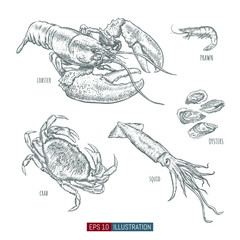 Hand drawn sea animals set. Engraved style vector illustration. Template for your design works.