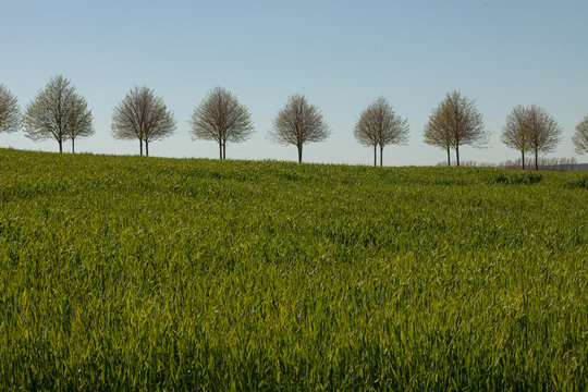 tree on the horizon 2