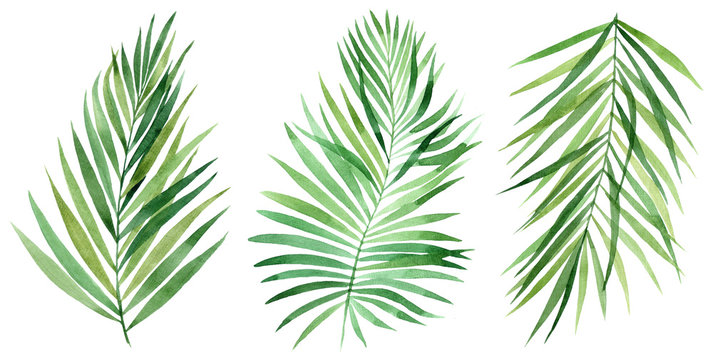 Set of tropical leaves. Jungle, botanical watercolor illustrations, floral elements, palm leaves, fern and others. Hand drawn watercolor set of Anthurium green leaves and home plant