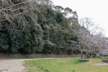 水城の木樋