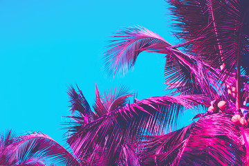 Wall Mural - Copy space pink tropical palm tree on sky abstract background. Summer vacation and nature travel adventure concept.