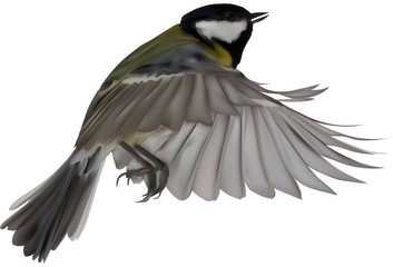 illustration with isolated yellow great tit in flight