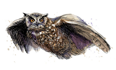 Door stickers Hand drawn Sketch of animals Long-eared owl in flight. Sketchy multicolored image on white background.