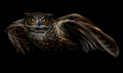 Long-eared owl in flight. Color image on black background