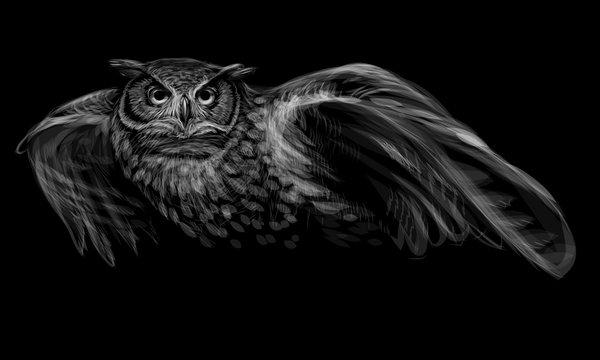 Long-eared owl in flight. Monochrome image on black background.