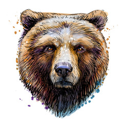 Sketchy colored portrait of a brown bear looking ahead against a white background.