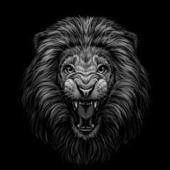 Monochrome portrait of a growling lion on a black background