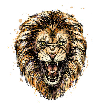 Sketchy graphic color portrait of a roaring lion on a white background with splashes of watercolor