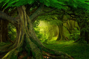 Foto op Canvas Bomen Asian rainforest