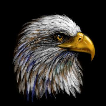 Graphic, color portrait of a  eagle on a black background.