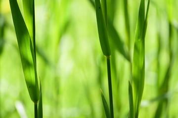 Wiese Gräser Gras Grün Lichtspiel Sonnenschein hell freundlich Hintergrund Natur Makro Bokeh