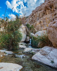 Ein-Gedi - the reserve of Israel