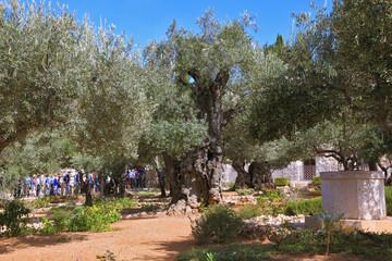 Bustling walking tour in Garden of Gethsemane