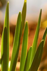 Lichtspiel Sonnenstrahlen Durchscheinen Gräser Blätter Grün Bokeh Smooth background Makro Nature Lake Forest