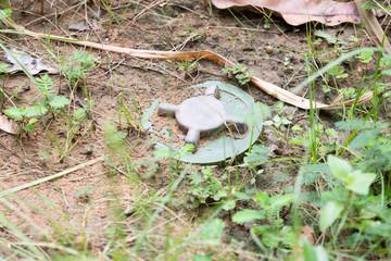 land mines hidden in undergrowth