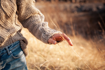 Close-up of a young woman in a knitted sweater and jeans walking through a wheat field and touching her ears of wheat