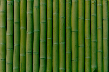 row of green color bamboo located vertically