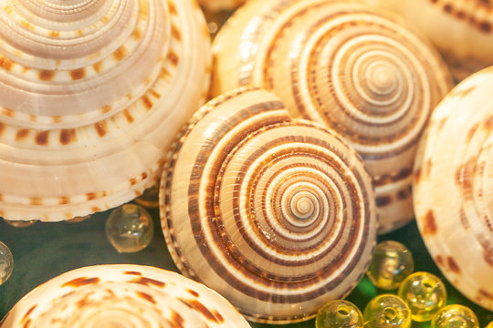 Close-up exotic spiral sea shells with crystal balls marbles on green velvet.