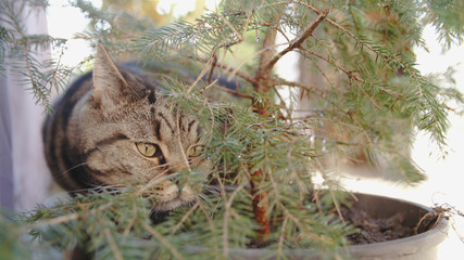 Cat hiding in the bushes