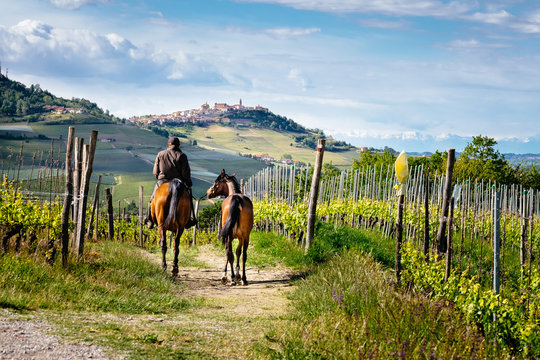 Man on a horse rides among beatiful Barolo vineyards with La Morra village. Trekking pathway. Viticulture, Langhe, Piedmont, Italy, Unesco heritage. Barolo, Dolcetto, Barbaresco wine.