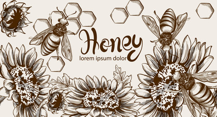 Honey, bees and sunflowers Vector line art card. Retro vintage old effect styles