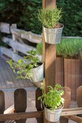 Kräutertöpfe mit frischen Küchenkräutern dekorativ an einem Holzpfosten befestigt