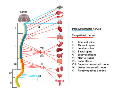 Infographics scheme of anatomical structure of human nervous system.