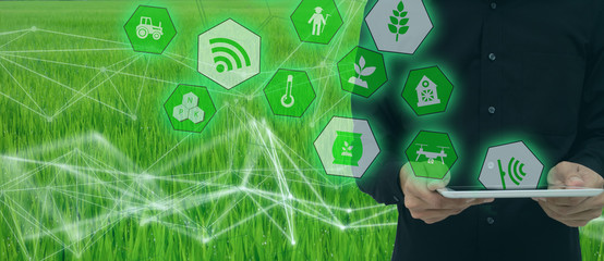 Wall Mural - smart farming,industrial agriculture concept with artificial intelligence(ai). Smart Farmer use robot and  augmented reality technology to research,collect,control ,monitor and management in the field