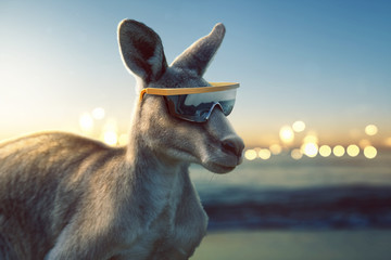 Fotobehang Kangoeroe Känguru mit Sonnenbrille am Meer