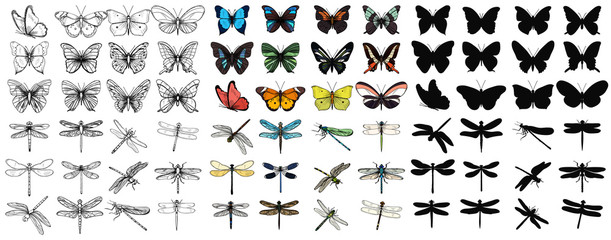 vector isolated set of multicolored butterflies and dragonflies