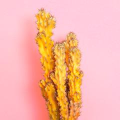 Cactus Fashion Set. Art gallery Design. Minimal Stillife. Vanilla Trendy Pastel Yellow Color. Sweet Summer Style. Yellow Neon cactus Mood. Creative fashionable on coral. Surrealism