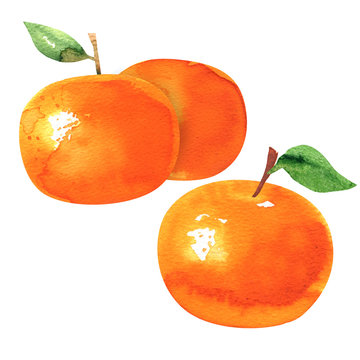 Group of ripe orange tangerines with leaves, tangerine or clementine fruit, citrus, isolated, hand drawn watercolor illustration on white background