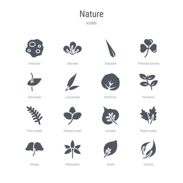 set of 16 vector icons such as falcate, ovate, palmatelly, ginkgo, pedunculate, cordate, straberry leaf, pine needle from nature concept. can be used for web, logo, ui\u002fux