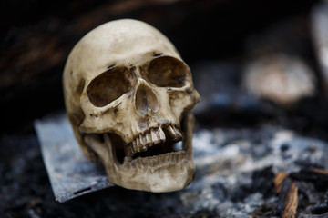 Human skull among the coals in the ashes of the fire. A copy of a human skull on ashes close-up for Halloween. Problems of ecology, death and rebirth