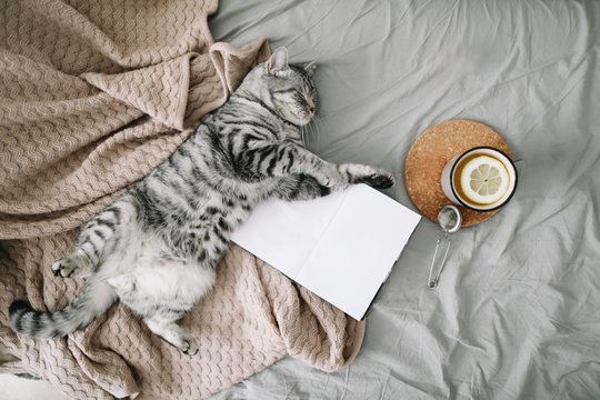 View from above of funny cat sleeping on the blanket  on hygge background. Cozy Flatlay of female blogger