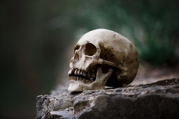 The skull of a man on a large gray stone slab. A copy of a human skull on a rock close-up for Halloween.